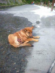 ტრავმირებული ძაღლის ფოტო ქუჩაში