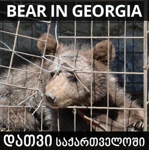 დათვი, საქართველო, დათვები, GSPSA, საქართველოს ცხოველთა დაცვისა და გადარჩენის საზოგადოება, bear, georgia, bear in georgia